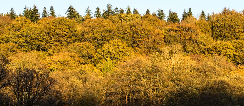 Goldener Flensburger Herbst